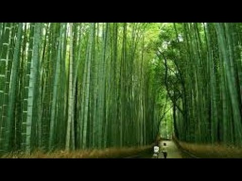 Les Brown Chinese Bamboo Tree (In Hindi)
