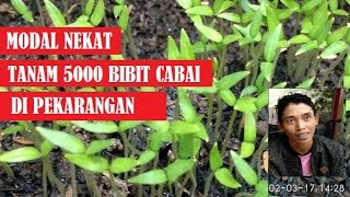 Video Modal Nekat, Tanam 5000 Bibit Cabai di Pekarangan download MP3, 3GP, MP4, WEBM, AVI, FLV Juli 2018