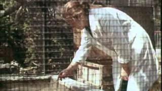 Беспокойная должность. О Новосибирском зоопарке (1981)