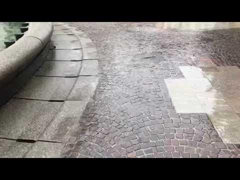 Esche topicide in piazza Martiri a Belluno