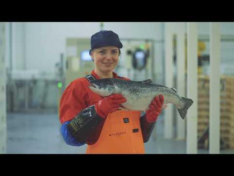 Wilsgård Fiskeoppdrett AS
