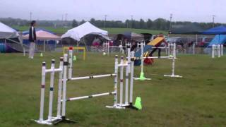 This Video Previously Contained A Copyrighted Audio Track. Due To A Claim By A Copyright Holder, The Audio Track Has Been Muted.     Derek Mx, Mxj May 22, 2011 Lower Bucks Dog Training Club Trial Yardley, Pa