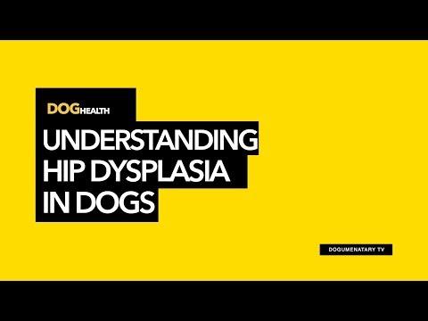 UNDERSTANDING HIP DYSPLASIA IN DOGS