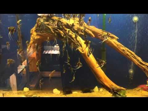DIY Driftwood!