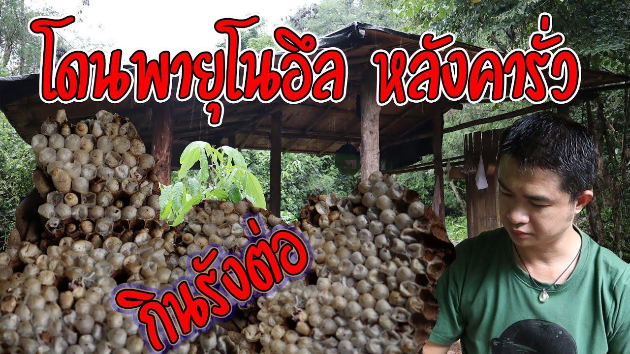 ทำอาหารป่าเมนูเด็ด พายุโนอึลเข้า หลังคารั่ว ข้าวโพดล้ม