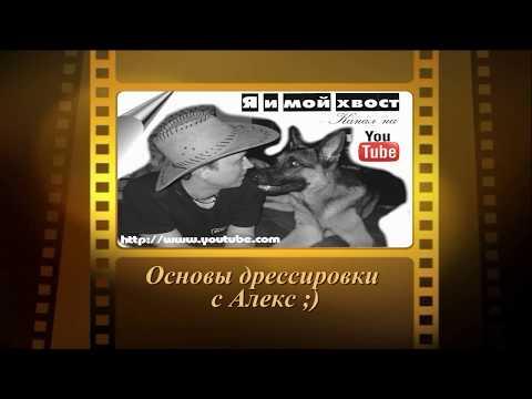 Основы дрессировки собак с Алекс