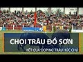 Chọi trâu Đồ Sơn: Kết quả 'doping' trâu húc chủ | VTC1