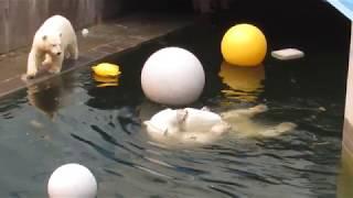 Герда сбежала от медвежат в воду 22.07.2019