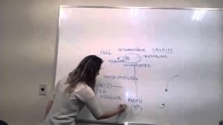 Fotossíntese para os desesperados (ENEM/Vestibulares)