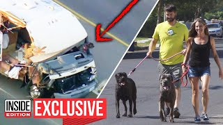 Dogs Find Home After California RV Chase