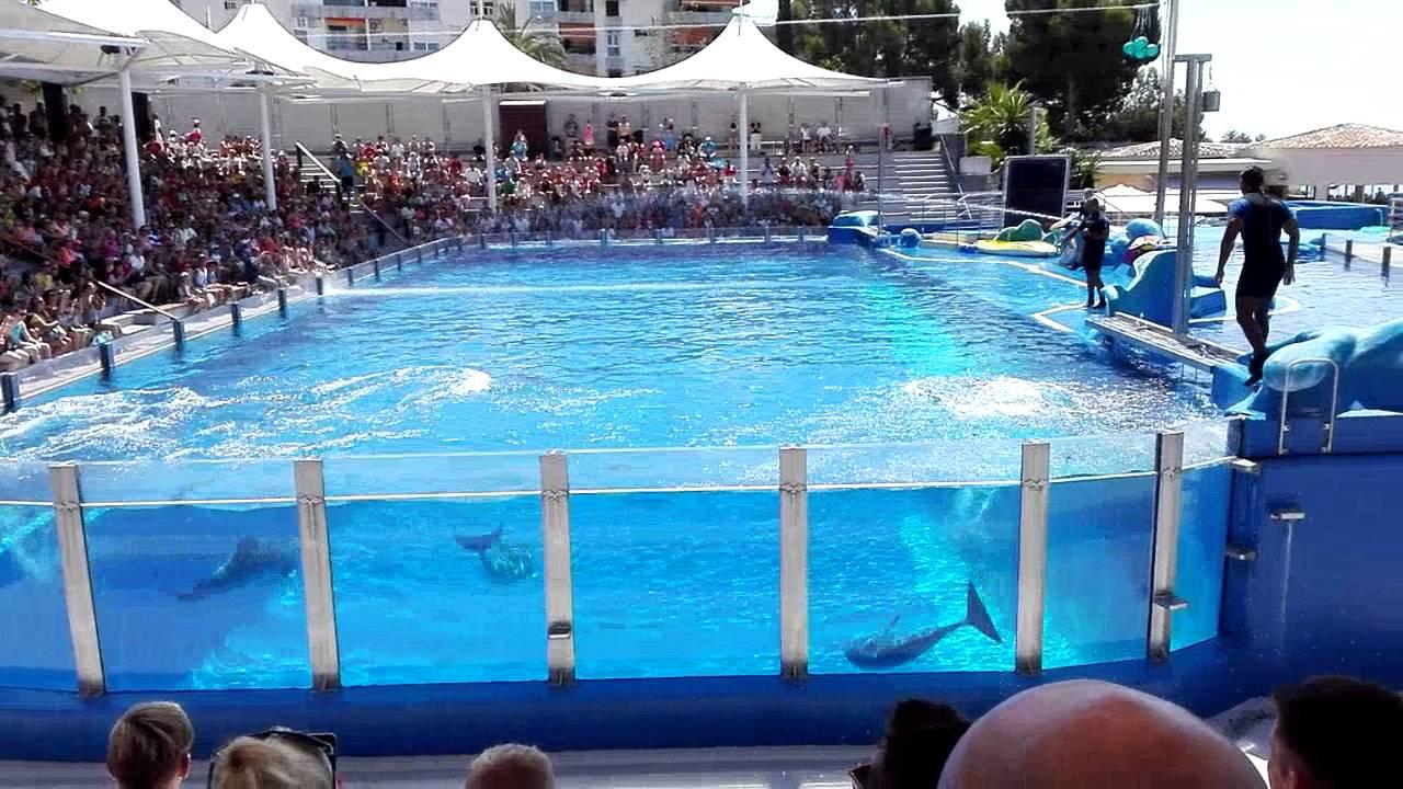 Dolphin show Marineland 2016 - YouTube