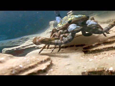 The Terrifying Giant Scorpion That Roamed Prehistoric Oceans