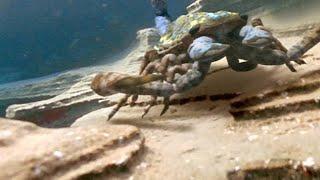 The Terrifying Giant Scorpion That Roamed Prehistoric Oceans