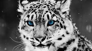 Los 10 Animales más Hermosos del Mundo