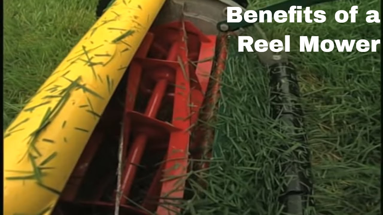 Looking for the best reel lawn mower? 2019 Product Reviews | MAS