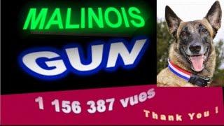 Malinois Incroyable- GUN, (langage des signes ) partie 1