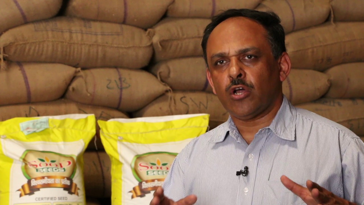 Sood Seeds Helping to Expand the Reach of Zinc Wheat in India