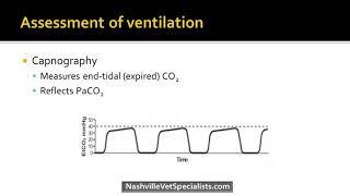 A Review of Respiratory Emergencies - Veterinary Medicine