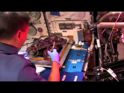 Astronauts try extra-terrestrial lettuce for the first time