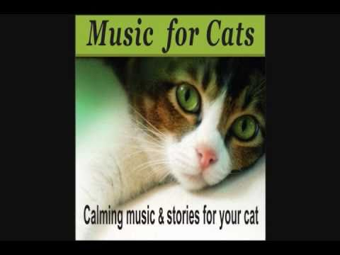 Music for Cats - Calming music & stories for your cat