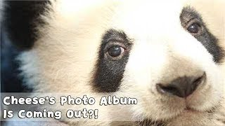Cheese's Photo Album Is Coming Out?! Your Mori Girl's Gonna Hit! | iPanda