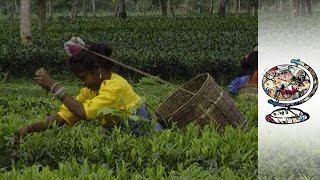 Violence in Assam Tea Fields (1997)
