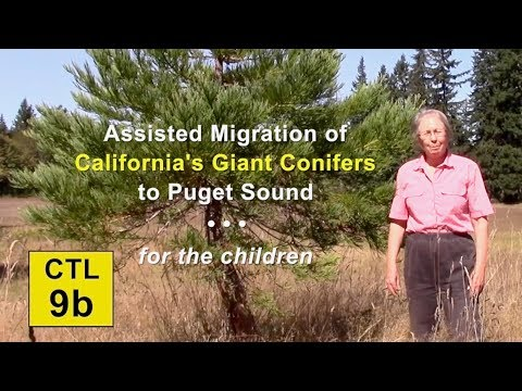 CTL 9B - Assisted Migration of California's Giant Conifers to Puget Sound for the Children