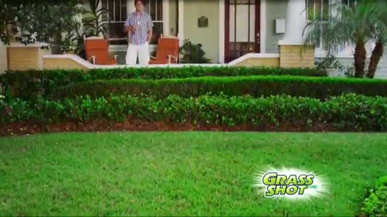 Grass Shot Quick And Easy Way To Grow Grass