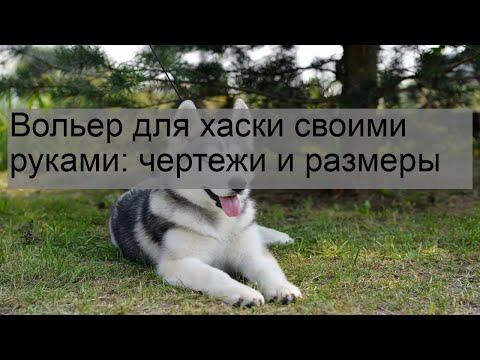 Чертеж вольера для собаки своими руками