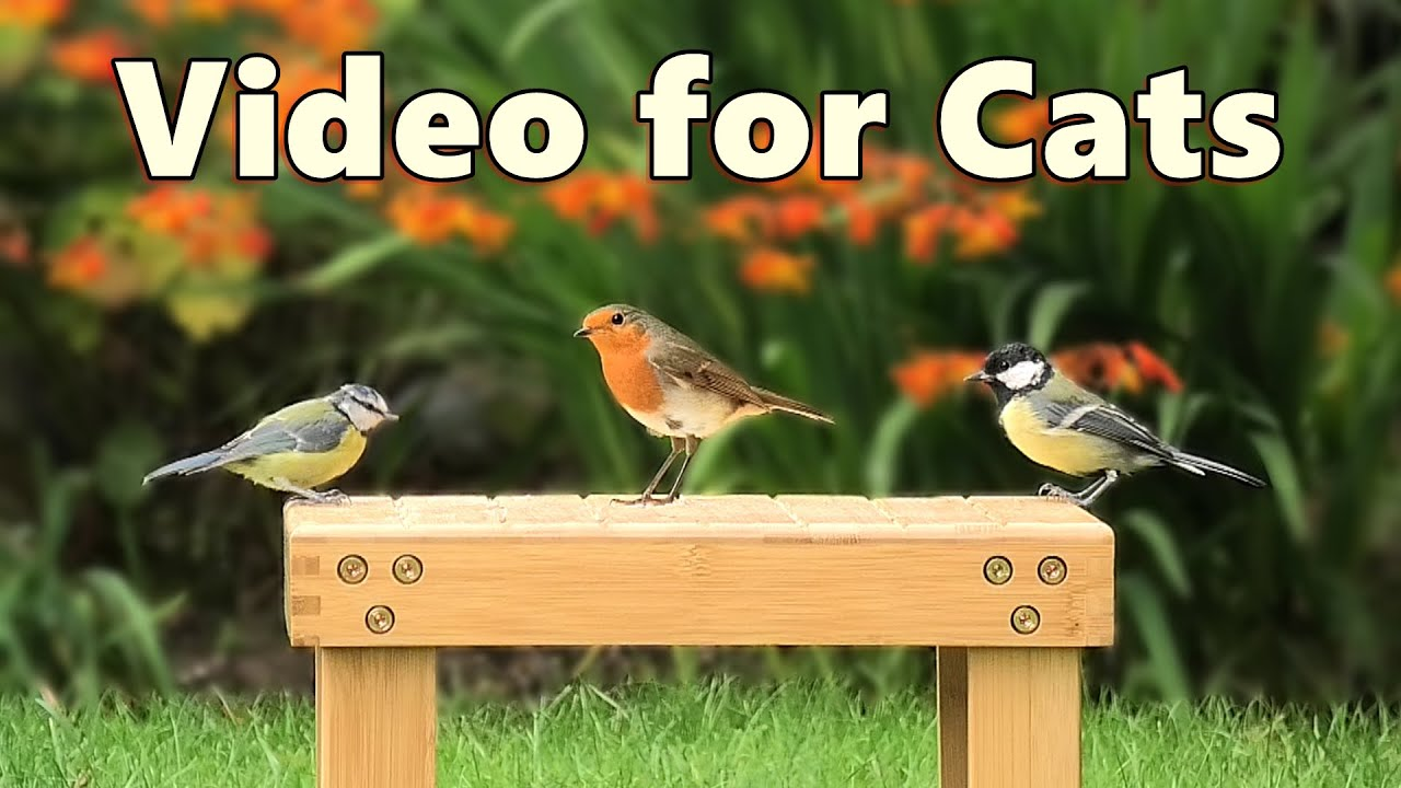 Download Videos for Cats ~ Pretty Little Birds Spectacular ⭐ NEW 8 HOURS ⭐