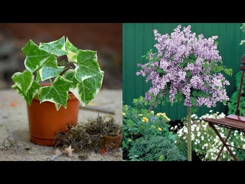 11-plants-you-should-never-include-in-your-landscaping
