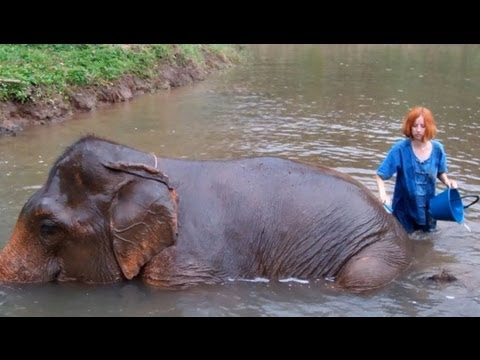 Working with Asian Elephants in Thailand - I learned a lot!