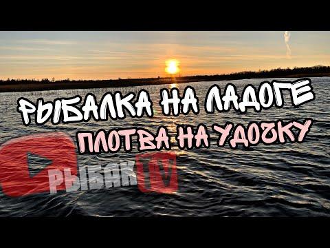 Ловля плотвы на Ладожском озере 2020.  Плотва на Ладоге на поплавочку в мае.
