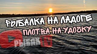 Ловля плотвы на Ладожском озере 2020 Плотва на Ладоге на поплавочку в мае