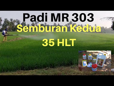 Download PADI MR 303 - Semburan Kedua Racun Organik Ulat & Kulat & Vitamin