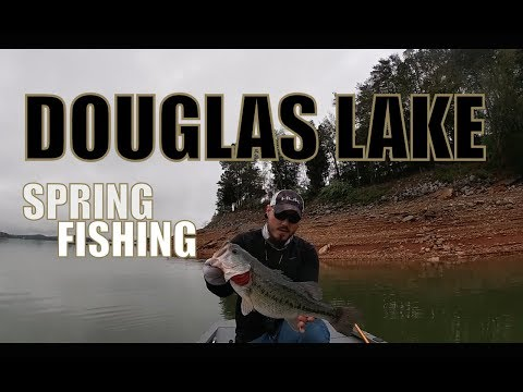 DOUGLAS LAKE: Tennessee Spring Bass Fishing