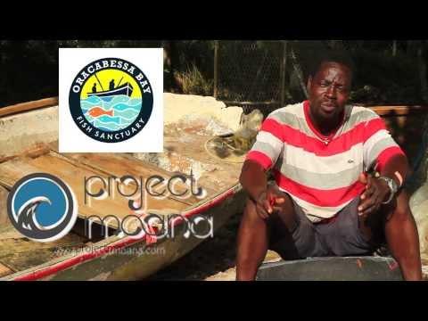The Coral Gardeners of Oracabessa, Jamaica
