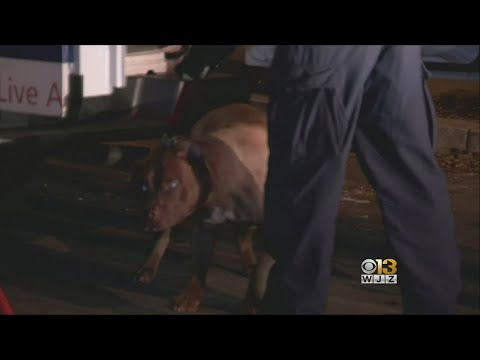 Pit Bull Euthanized After Attacking, Killing Woman Inside DC Home