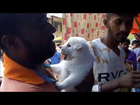 Cute Puppies for Sale At Galiff Street Kolkata l Busy Galiff Street Pet Market Kolkata India