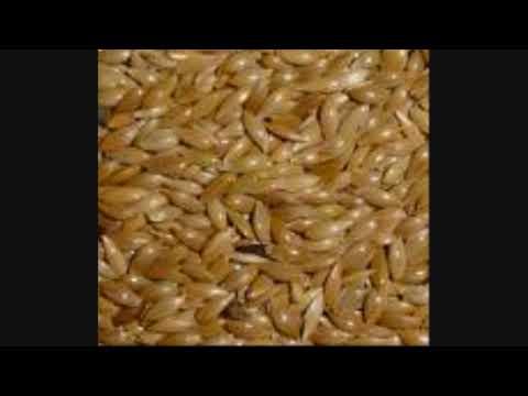 INCREIBLE!! PIEREDE ASTA 25 LIBRAS DE PESO!! de YouTube · Duración:  1 minutos 30 segundos
