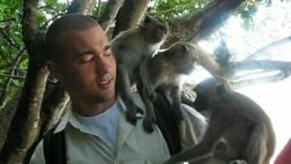Monkeys @ Ao Nang Beach (Krabi,Thailand)