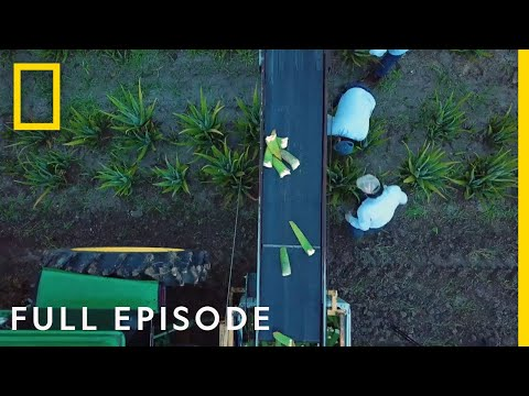 Secrets Of The Garden - Full Episode | National Geographic