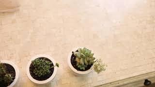 교대역꽃집 공기정화 음이온 방출 실내식물 사무실 책상용…