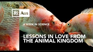 Dating Advice From The Animal Kingdom - A Week in Science