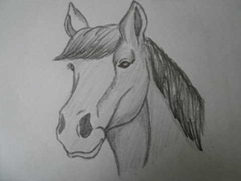 How to draw a horse head step by step for beginners easy way youtube
