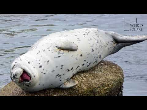 Interesting facts about harbor seal by weird square