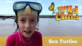 Swimming with Sea Turtles: Kenzie Wild Child