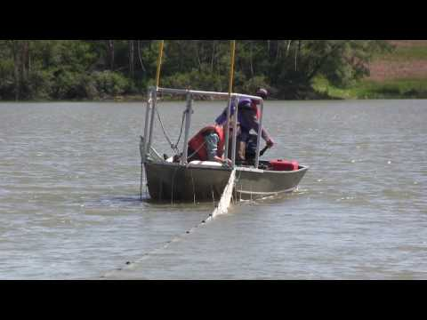 How Many Fish Are In That Lake? - Population Estimates Of Sportfish In The Binbrook Reservoir