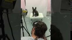 Behind the scenes of Tesco pet food shoot