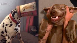 Which Breed Wins: Weimaraner vs Dalmatian